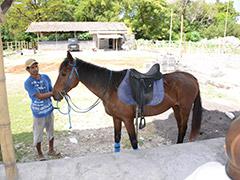 Horse ride3