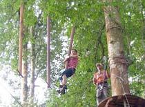 Treetop15