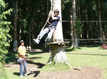 Treetop5