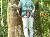 Treetop4