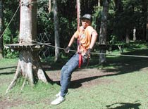 Treetop7