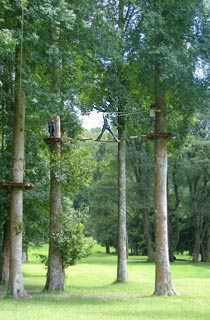 Treetop12