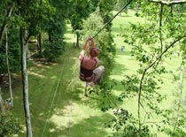 Treetop13