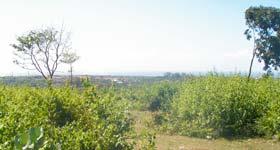ヌサドゥアの土地 LS-005