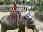 Elephant Ride/30min