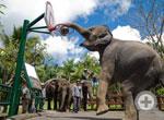 Elephant Show/15min