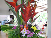 鮮やかな南国の花が迎えます