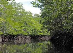 レンボガン島5