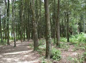 西部国立公園4
