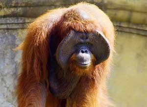 バリ動物園7