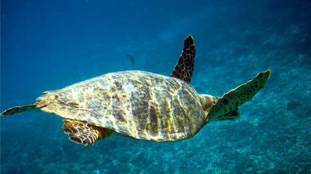 カップル・夫婦で想い出に残る旅行を!バリ島ハンターのダイビング