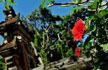 バリ島 観光 スポット6