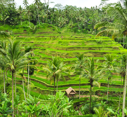Bali Sightseeing Group Tour 4