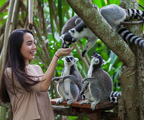 バリ動物園(バリズー) 見て触って楽しめます