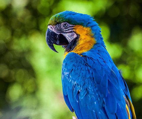 バリ動物園(バリズー) 色鮮やかなオウム