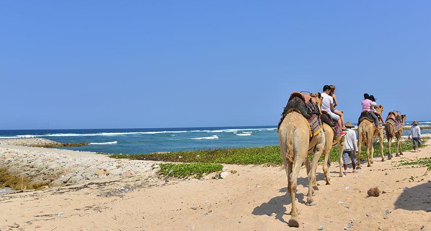 ゆっくりとラクダに乗ってビーチを散歩します