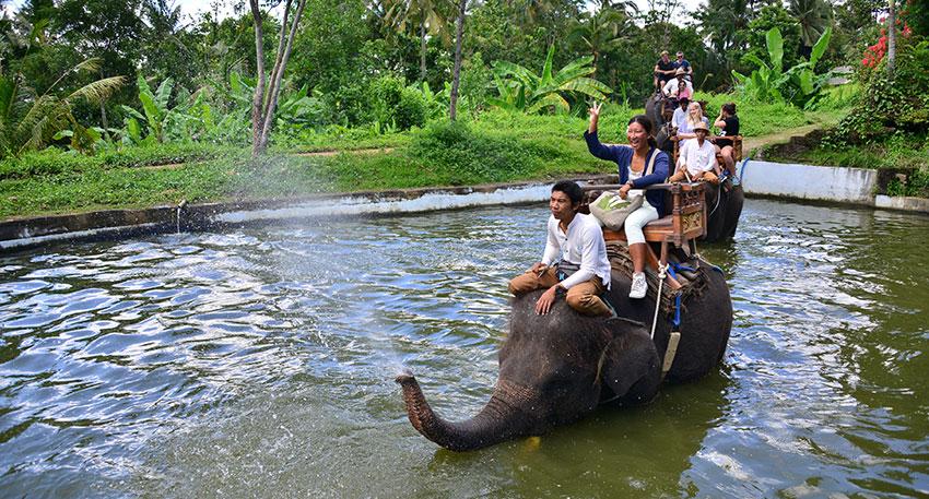 象が鼻から水を吹く演出があります