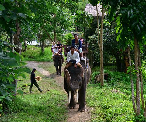 自然豊かな象のよって快適な場所です