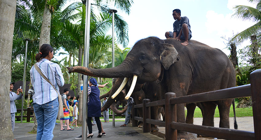 人懐こい象を間近でみることができます