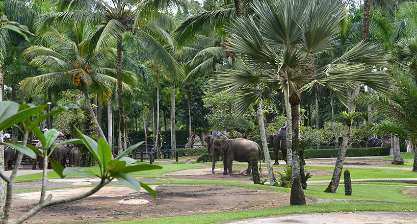広大な敷地にスマトラ象が暮らしています