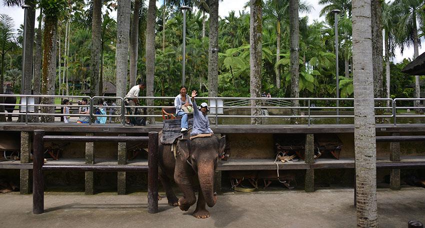 象を知り尽くした専属のトレーナーがつきます