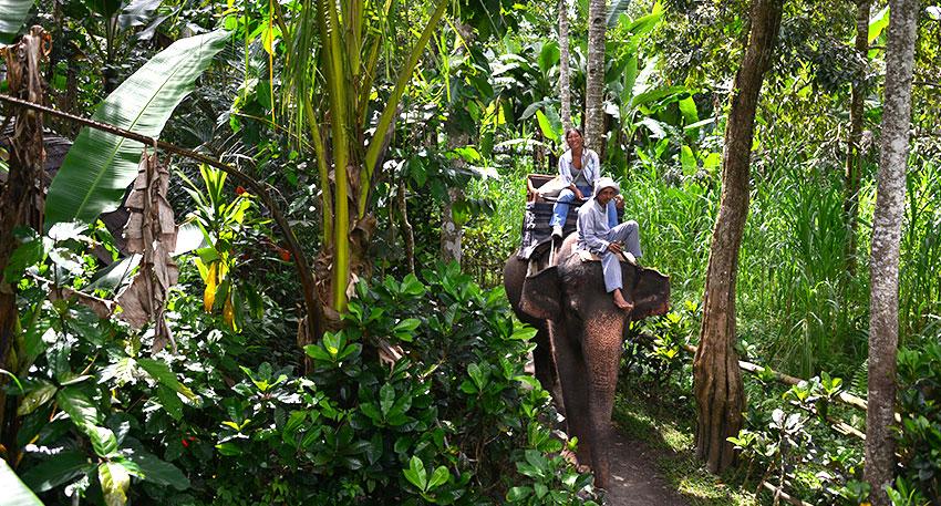 象に乗ってゆっくりと散歩を楽しみましょう