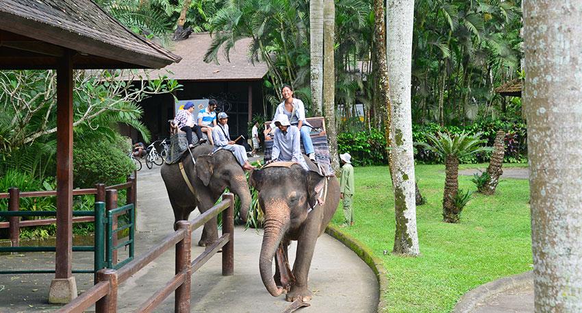 30分たっぷり象乗りを楽しめます