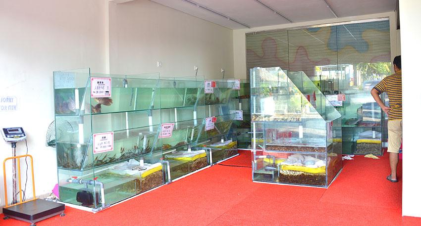 香港海鮮料理で味わうことが出来る新鮮な魚やロブスターなどの水槽があります