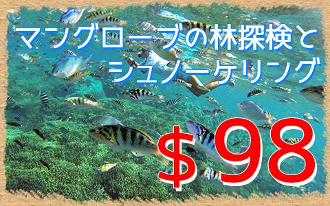 バリ島 マングローブ林自然探検とシュノーケリングツアー 特徴