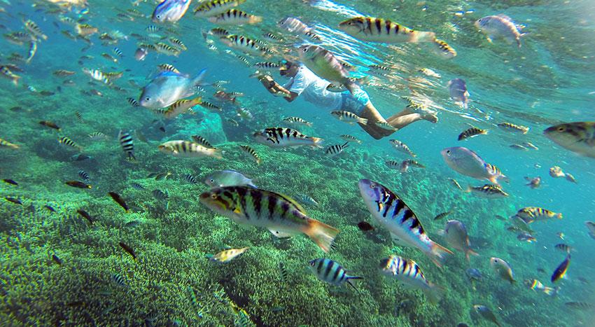 レンボンガン島の海は透明度が高く人気のシュノーケリングスポットです