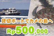 貸切グラスボトムボート+カメの島