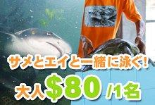 サメと泳ごう!オーシャン パーク エコ ツアー
