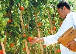 バリ島スパ 自家栽培の野菜