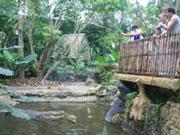 バリ西部国立公園