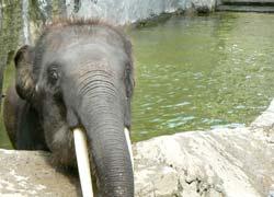 象の水遊び2