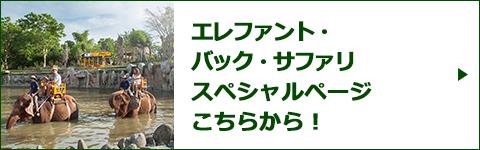 エレファント・バック・サファリスペシャルページバナー