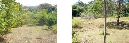 ジンバランの土地 LS-010