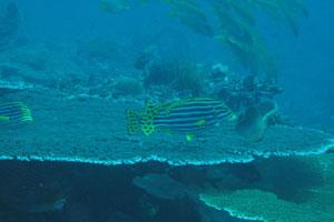 レンボガン&ヌサペニダ島5