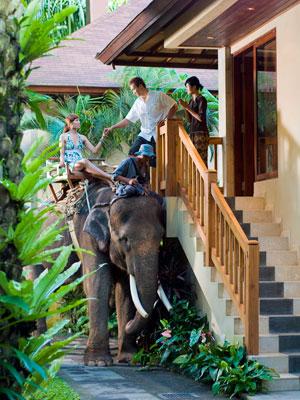 象がロッジまでお出迎え
