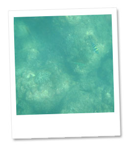海中の風景