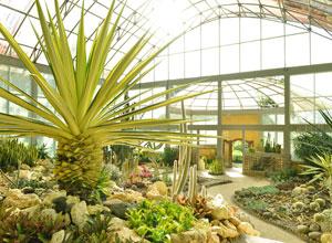 バリ植物園5