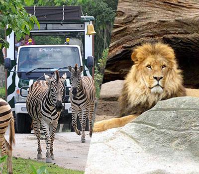 バリ島 厳選動物ふれあい バリ サファリ&マリンパーク 画像
