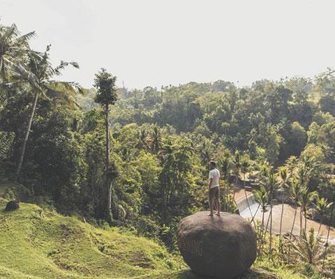 ヤシの木や川を見渡せる絶景