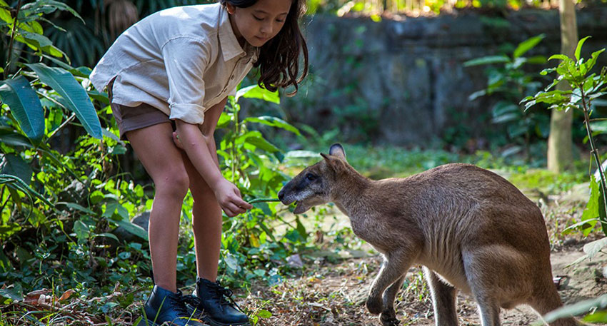 近くで動物を見てみましょう