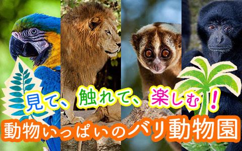 バリ島 厳選動物ふれあい バリ動物園(バリズー)