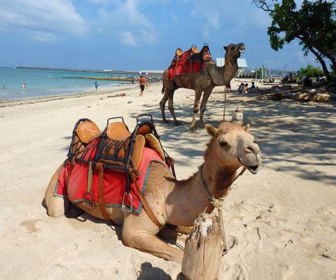バリ島の空港のすぐ近くにあるビーチでキャメルライド