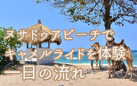 バリ島 厳選動物ふれあい キャメルサファリ 一日の流れ