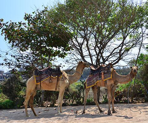 ヌサドゥアのグランドニッコーバリのビーチで催行