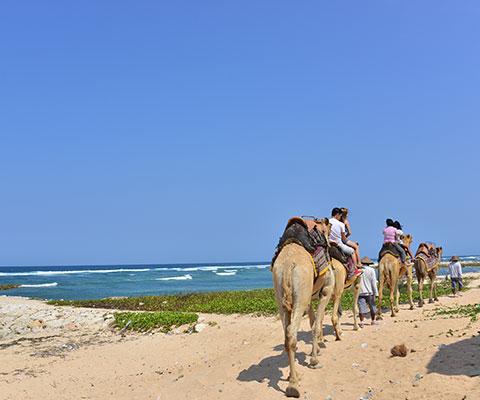ラクダに乗ってゆっくりとビーチを散歩