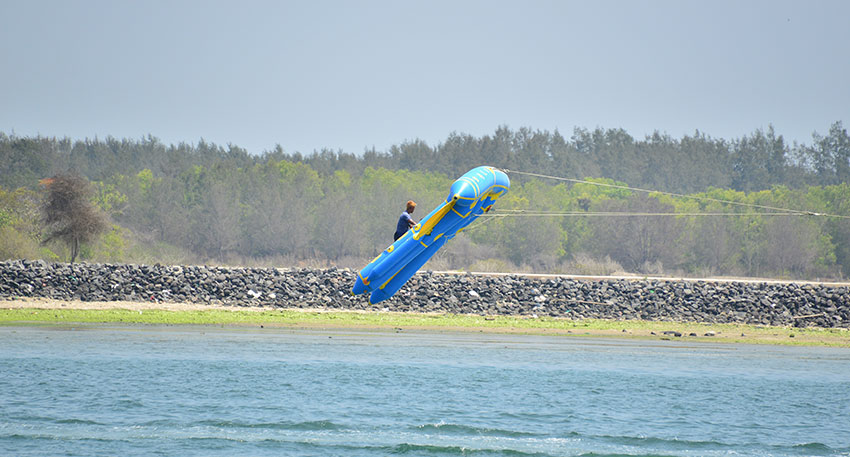 空中へ飛ぶフライフィッシュ